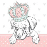 Cute puppy wearing a crown. Vector illustration for greeting card, poster, or print on clothes. Dog clothing. Royalty Free Stock Photos