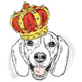 Cute puppy wearing a crown. Vector illustration for greeting card, poster, or print on clothes. Dog clothing. Royalty Free Stock Images