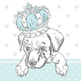 Cute puppy wearing a crown. Vector illustration for greeting card, poster, or print on clothes. Dog clothing. Royalty Free Stock Photo