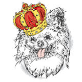Cute puppy wearing a crown. Royalty Free Stock Images