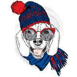 Cute puppy wearing a hat and scarf. Vector illustration for greeting card, poster, or print on clothes. Dog clothing. Royalty Free Stock Photography