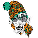 Cute puppy wearing a hat and scarf. Vector illustration for greeting card, poster, or print on clothes. Dog clothing. Royalty Free Stock Image
