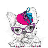Cute puppy wearing a hat and sunglasses. French Bulldog. Royalty Free Stock Photo