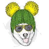Cute puppy wearing a hat and sunglasses. Illustration for a card or poster. Vector illustration. Dog. Stock Photo