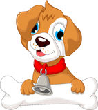 cute puppy wearing a red collar with bells Royalty Free Stock Image