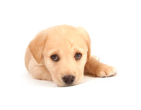 Cute puppy on white background Stock Images