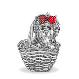 Cute puppy in a wicker basket. Yorkshire Terrier. Beautiful dog. Vector illustration for a card or poster. Cute puppy in a wicker basket. Yorkshire Terrier Stock Photos