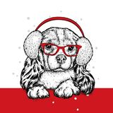 Cute puppy in winter headphones and glasses. Beautiful thoroughbred dog. Spaniel. New Year and Christmas, winter.  Stock Photos