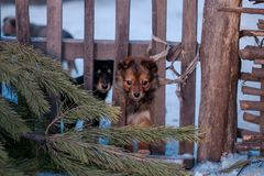 Cute puppy winter photo, little dogs background stock photography