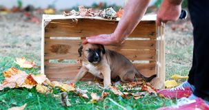 Cute puppy in a wooden fruit crate stock photography