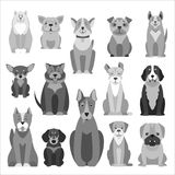 Cute Purebred Dogs Cartoon Flat Vectors Icons Set. Colorless set of cute dogs cartoon icons, pets sitting with smiling muzzle and hanging out tongue monochrome Stock Images
