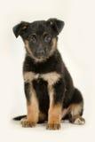 Cute purebred puppy Stock Photo