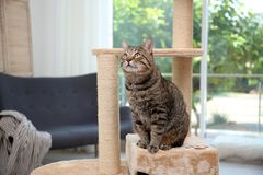 Cute pussycat on cat tree. At home stock photos