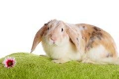 Cute rabbit Stock Image