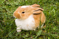 Free Cute Rabbit Stock Photo - 13010640