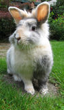 Cute rabbit. A cute rabbit in the garden royalty free stock image