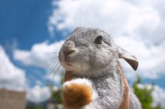 Cute Rabbit. Kids hands holding a sweet bunny rabbit royalty free stock images