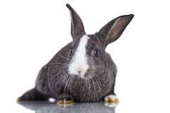 Cute rabbit Stock Photo