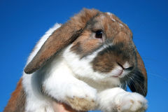 Cute rabbit Royalty Free Stock Images