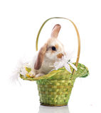 Cute rabbit in the basket Stock Photo