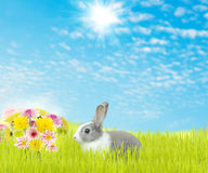 Cute rabbit and beauty flower spring season Stock Image