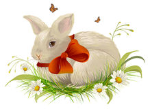Cute rabbit with bow sitting on grass. Easter rabbit with red ribbon Royalty Free Stock Photo