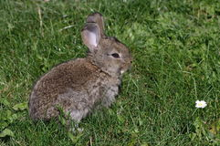 Cute rabbit Royalty Free Stock Photo