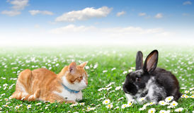 Cute rabbit with cat Stock Photography