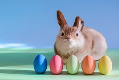 Cute rabbit and Easter eggs stock photography