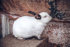 Cute rabbit in farm Stock Images