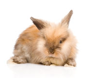 Cute rabbit in front. isolated on white background Royalty Free Stock Photos