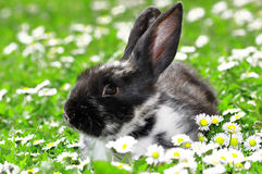 Cute Rabbit in Grass Royalty Free Stock Photography