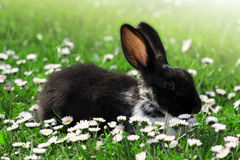 Cute Rabbit in Grass Stock Image