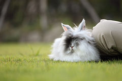 Cute Rabbit In Grass Field Stock Images