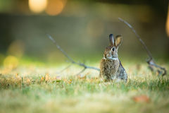 Cute rabbit in grass Stock Photography