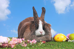 Cute rabbit on grass with sky background Royalty Free Stock Photography