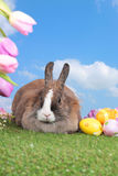 Cute rabbit on grass with sky background Stock Photography