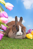 Cute rabbit on grass with sky background Royalty Free Stock Photo