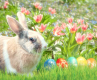 Cute rabbit in the grass with tulips Royalty Free Stock Image