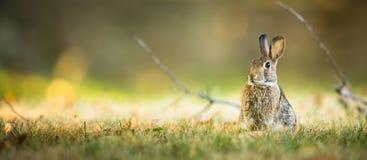 Cute rabbit in grass. Cute wild rabbit in grass Stock Image