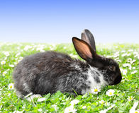 Cute Rabbit. In green  grass Stock Images