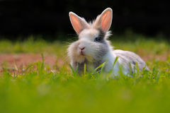 Cute Rabbit on Green Grass Stock Photo