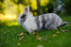 Cute Rabbit on Green Grass Royalty Free Stock Photo