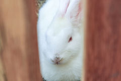 Cute rabbit on the hay Stock Photography