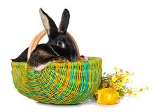 Free Cute Rabbit In A Basket Royalty Free Stock Photography - 209614817