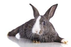 Cute rabbit Stock Images