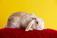 Cute rabbit over yellow background Stock Photos