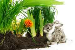 Cute rabbit, pet on the soil with orange flower and green plants Royalty Free Stock Images