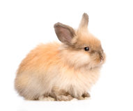 Cute rabbit in profile. isolated on white background Royalty Free Stock Photos