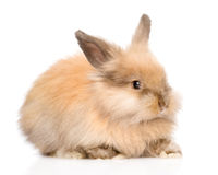 Cute rabbit in profile. isolated on white background.  royalty free stock photos